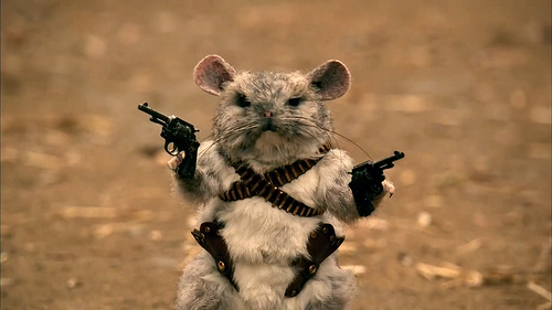 funny-chinchilla-showing-his-weapon
